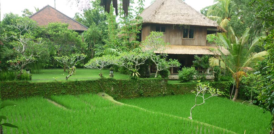 cheap hotel in ubud